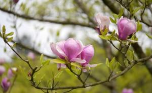 Frühlingruss